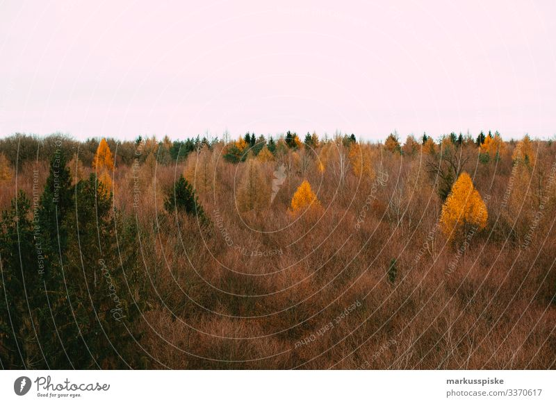 Autumn forest Autumnal Autumnal colours autumn colours Forest treetop path Treetops Deciduous forest Deciduous tree commercial timberland