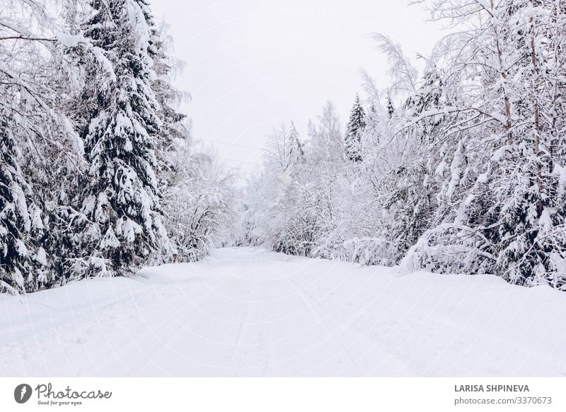 Snowy road in winter frosty forest Beautiful Vacation & Travel Winter Nature Landscape Sky Weather Snowfall Tree Park Forest Street Lanes & trails Highway