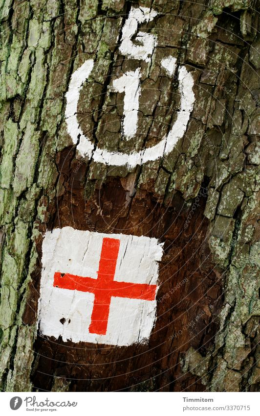 Thoughts come and go... tree Tree trunk bark mark Clue waypoint Crucifix White Red Orientation Nature Forest