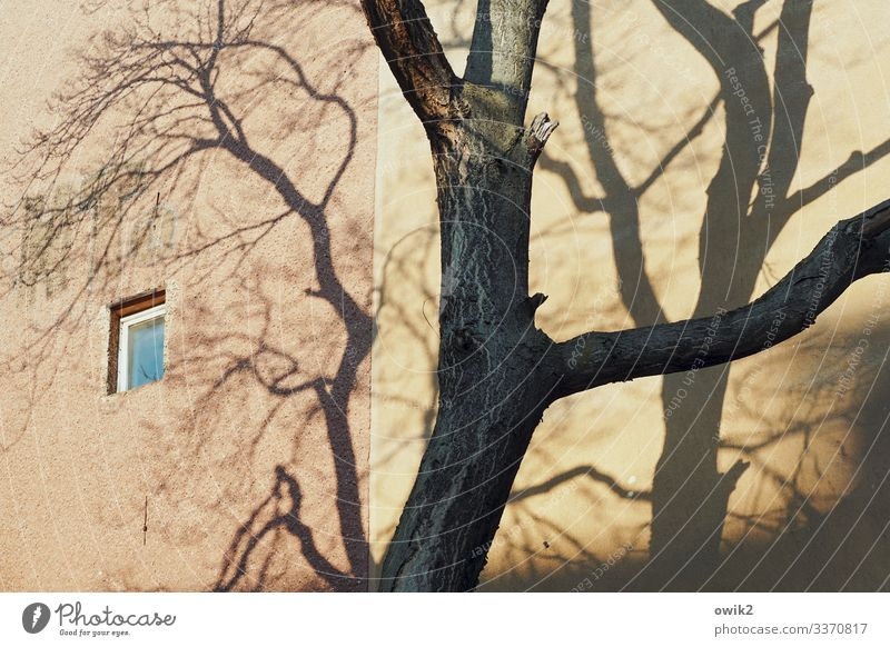 small window Tree Tree trunk Shade of a tree Branch Downtown Berlin Capital city Populated House (Residential Structure) Building Wall (barrier) Wall (building)