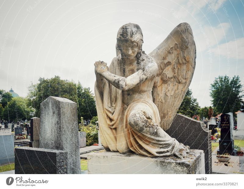 Sad angel Feminine Androgynous 1 Human being Sculpture Sky Clouds Beautiful weather Tree Angel Wing Cemetery Central cemetery Sandstone Grave Tombstone Stone