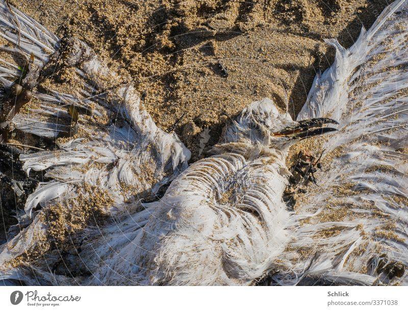 by-catch Coast Animal Wild animal Dead animal Seagull 1 Sand Disgust Creepy Maritime Gloomy Brown Black White Fishery Bird Feather Beach Death Fishing line