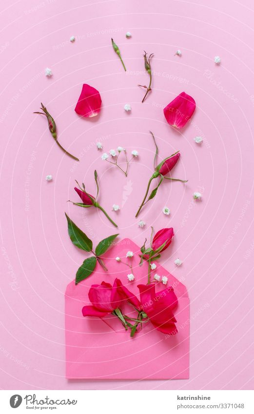 Spring composition with envelope and roses over pink background Design Decoration Wedding Woman Adults Mother Flower Rose Leaf Bright Hip & trendy Above Pink
