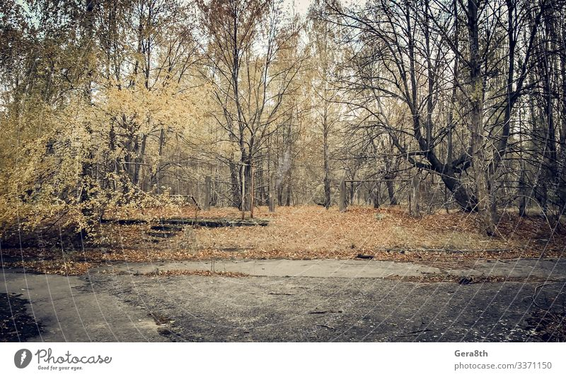 abandoned empty deserted park Chernobyl Ukraine Plant Autumn Tree Old Gloomy Dangerous Environmental pollution Destruction abandoned city abandoned park