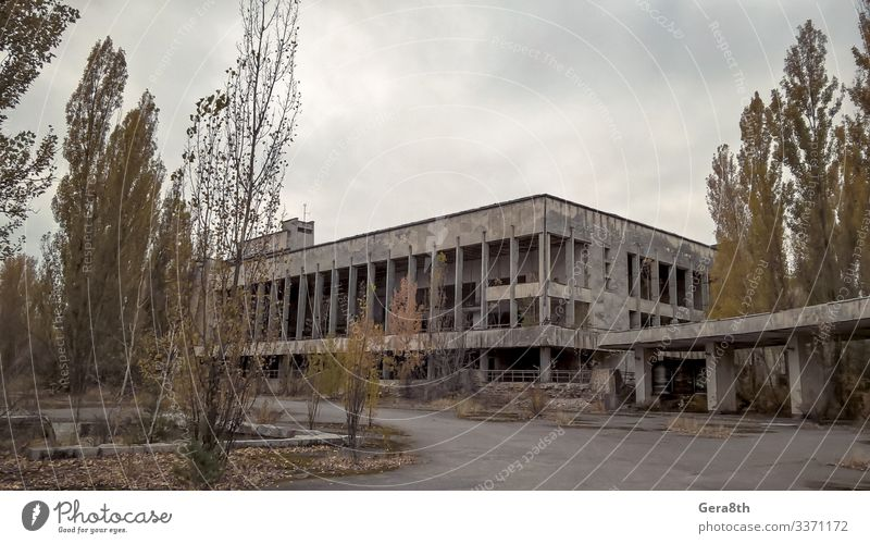 old abandoned empty building in Chernobyl Ukraine House (Residential Structure) Plant Autumn Tree Building Street Stone Old Green Acceptance Dangerous