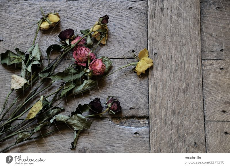 dead | withered roses pink Ostrich transient Loving relationship Love Lovesickness Divorce Divide quarrel marital quarrel marital row relationship crisis