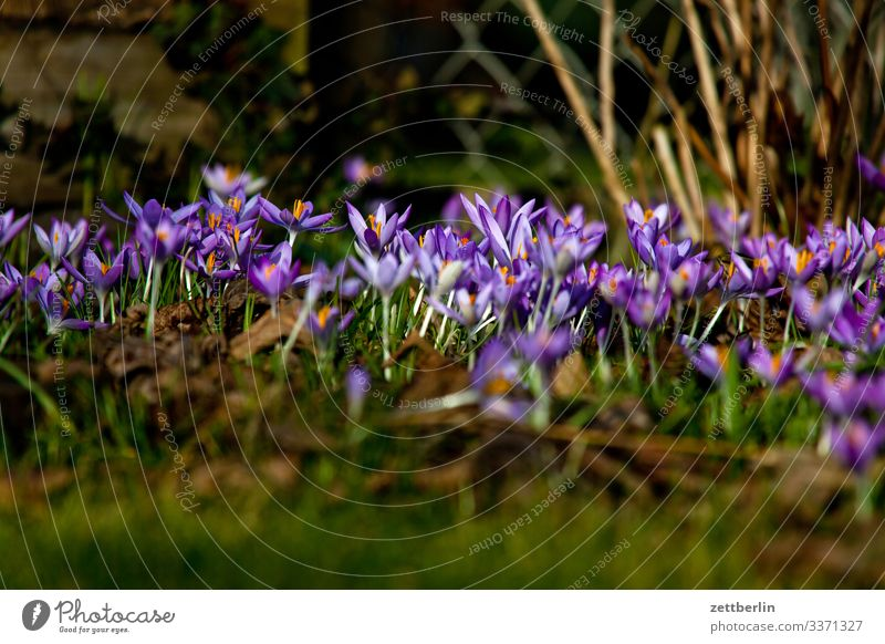 early bloomers Flower Blossoming Garden Grass Garden plot Deserted Nature Plant Lawn Calm Copy Space Depth of field Meadow Spring flowering plant