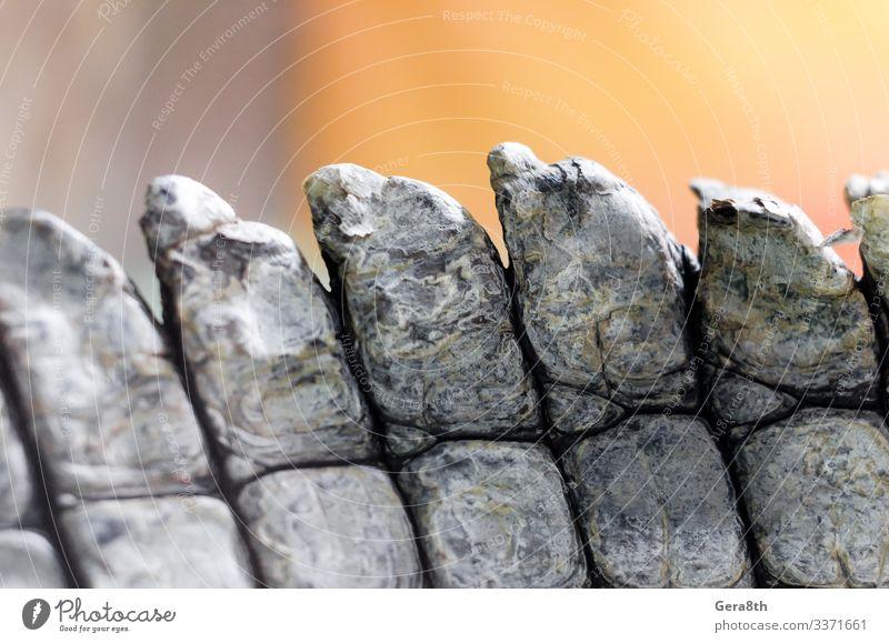 alligator crocodile skin in detail close up Skin Nature Animal Natural Brown Colour Alligator alligator skin backdrop background detailed Folds Live predator