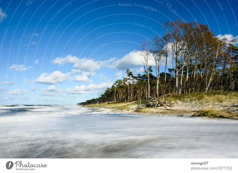 Stormy sea at the coastal forest of Darßer Weststrand Nature Landscape Plant Earth Air Water Sky Clouds Autumn Beautiful weather Wind Gale Tree Grass Waves