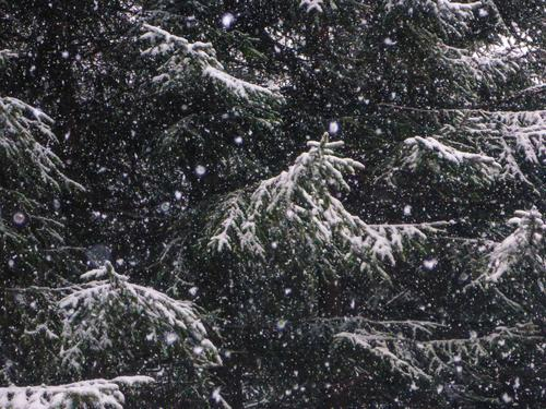i was fleeing willma | ice age Environment Nature Winter Climate Bad weather Snow Snowfall Tree Wild plant Forest Cool (slang) Dark Cold Bizarre Threat