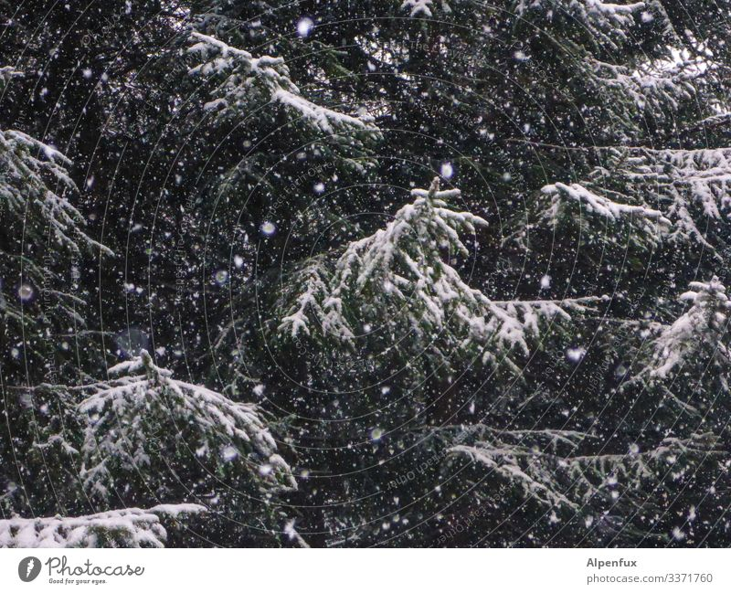 Nature Tree Forest Winter Dark Environment Cold Snow Snowfall Dream Cool (slang) Climate Threat Mysterious Irritation Bizarre