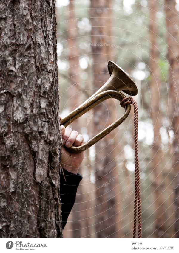 the forest calls. Tree trunk fanfare Forest Green Tree bark wind instrument Winds Hand Nature Exterior shot Day Rope Sound call sign