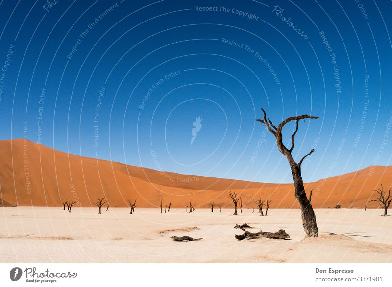 Hidden Vlei Nature Landscape Sand Climate Climate change Tree Desert Faded To dry up Gloomy Dry Vacation & Travel Surrealism Transience Time Namibia Africa