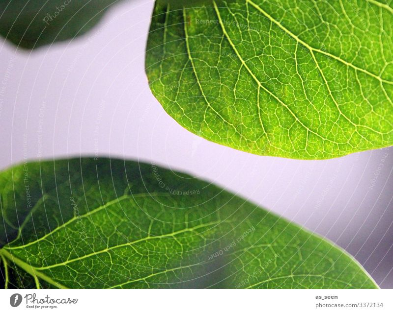 leaves Lilac Leaf Rachis Plant Green Macro (Extreme close-up) Nature Detail Shallow depth of field Deserted Colour photo Close-up Structures and shapes