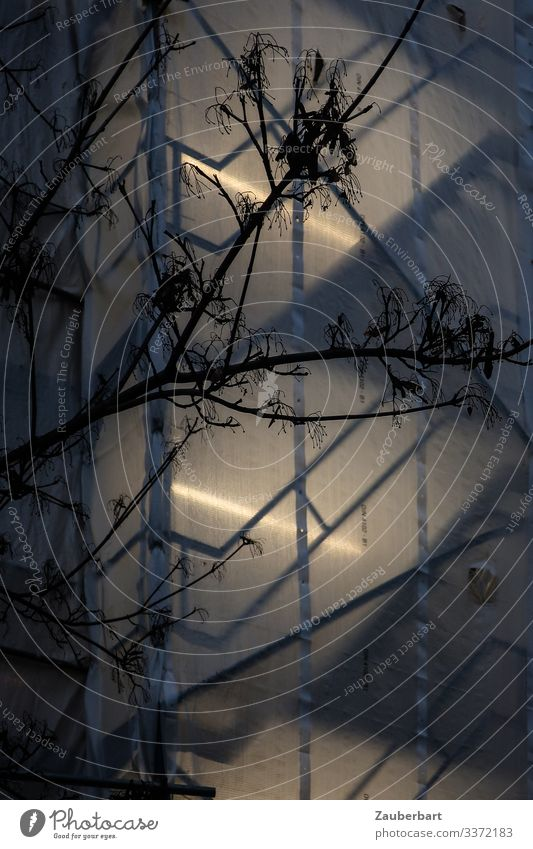 Transparent tarpaulin on scaffolding with neon light, in front of it silhouette of a bare tree Scaffold twigs Silhouette transparent Twilight Neon light Tree