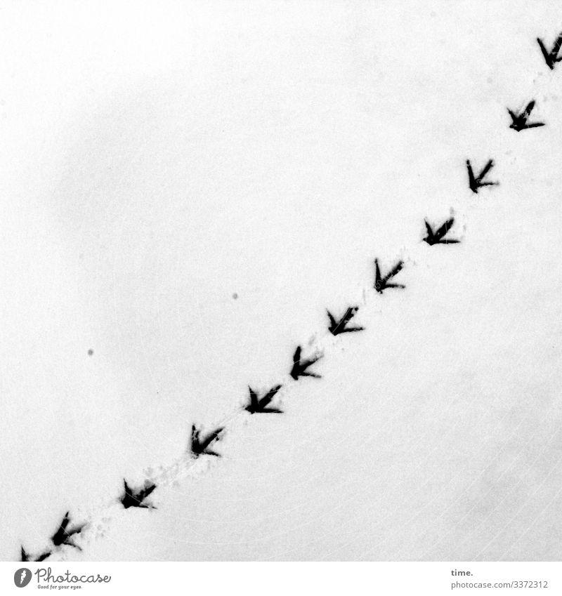Winter Lanes & trails Snow Movement Bird Bright Arrangement Crazy Perspective Wet Surprise Concentrate Inspiration Irritation Curve Whimsical