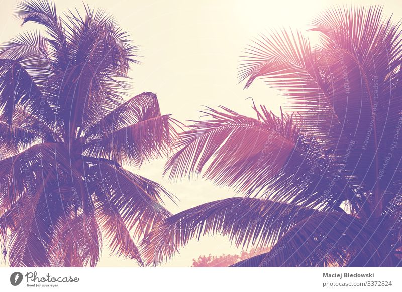 Palm trees leaves against the sun. Exotic Vacation & Travel Summer Summer vacation Sun Beach Island Nature Plant Sky Tree Leaf Adventure palm Tropical