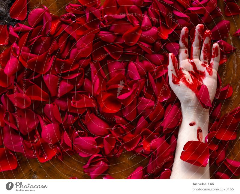 Human hand covered in blood lies in red rose petals Life Human being Man Adults Hand Fingers Earth Fog Flower Leaf Drop Love Dirty Dark Green Red Black Romance