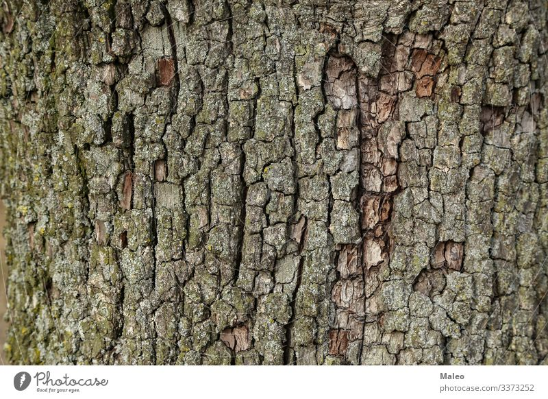 Pear bark Background picture Tree bark Nature Wood Brown Green Pattern Close-up Natural Plant Abstract Forest Old Exterior shot Surface Structures and shapes
