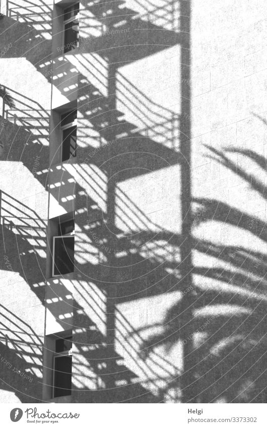 Shadow of a staircase and a palm tree on a white façade with windows Tree Palm tree Wall (barrier) Wall (building) Stairs Facade Window Banister Exceptional