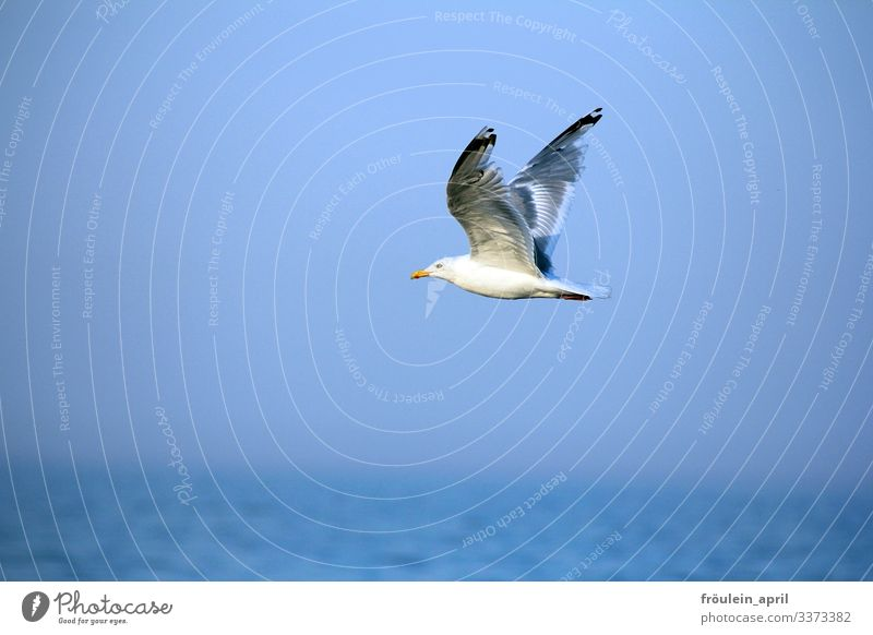 HAPPY BIRTHDAY PHOTOCASE to the 19th birthday of a good flight! Seagull Animal Bird Flying Sky Freedom Blue Grand piano White Summer Feather Ocean Nature