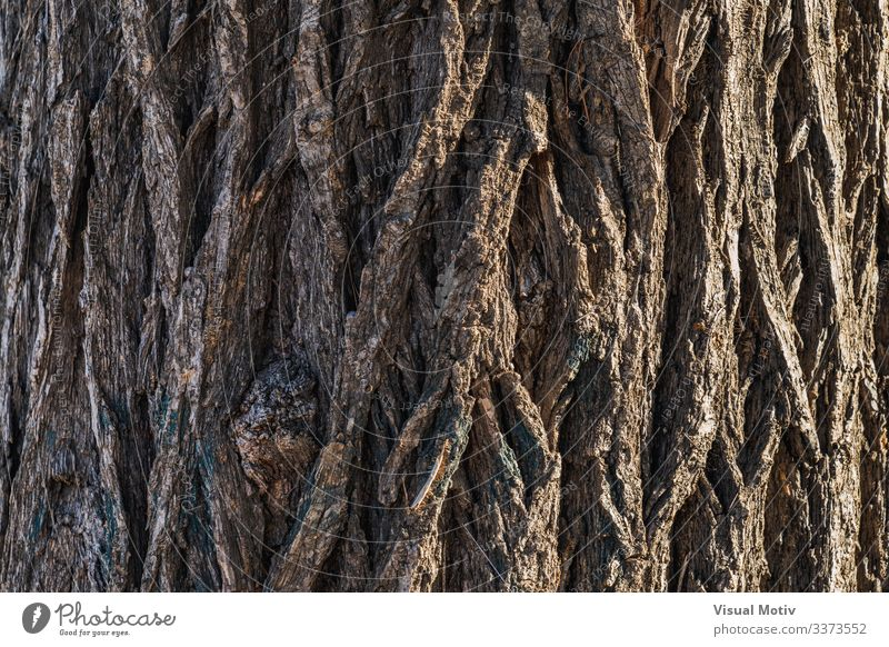 Bark texture of a Siberian Elm tree Life Garden Nature Plant Tree Park Old Natural Brown Colour Ulmus Pumila bark textured surface bark surface natural light