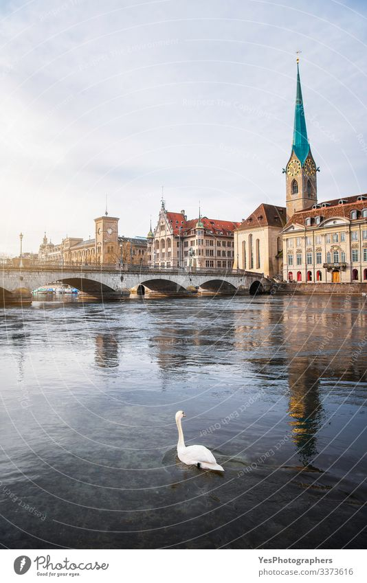 Zurich old town city center with bridge over Limmat and a swan Vacation & Travel Tourism Trip Adventure Sightseeing City trip Winter Culture Landscape