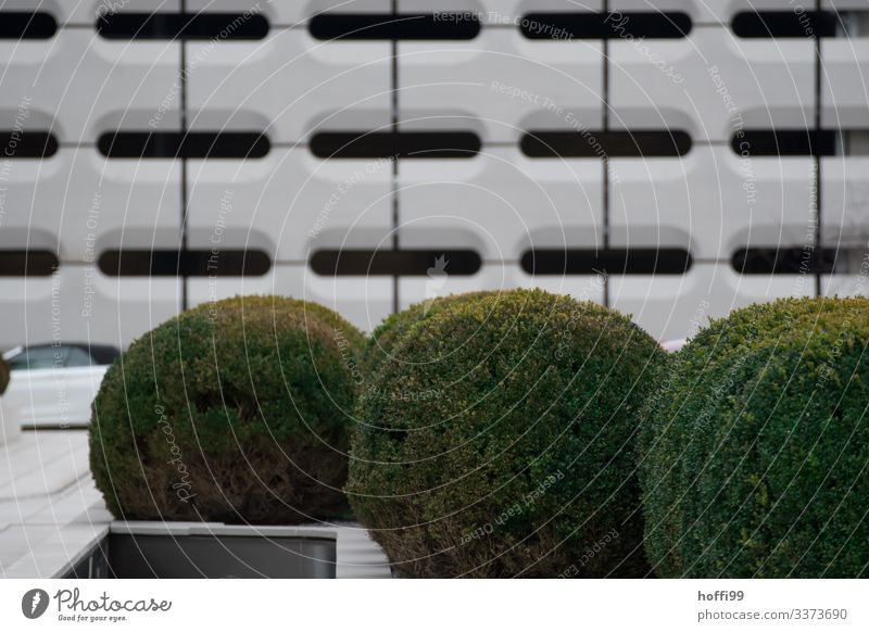 large boxwood bushes in front of abstract urban facade Beech Round Green Exterior shot Bushes Foliage plant City Spherical Shallow depth of field urban texture