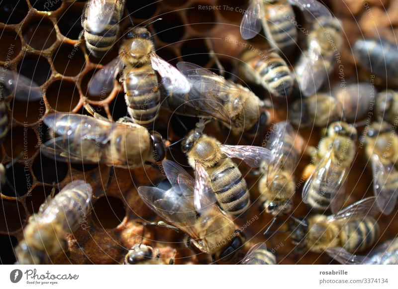 many buzzing bees are working diligently on a honeycomb | noise Bee Beehive Honey Honey bee Honeycomb Honey-comb Animal Farm animal Insect Bee-keeping