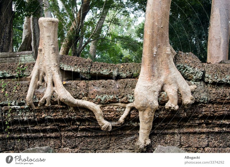 Tree Giving A Helping Root Life Nature Plant Stone Together Uniqueness Hope Conceptual design intelligent joint combined rare linked coupled conjoint connected