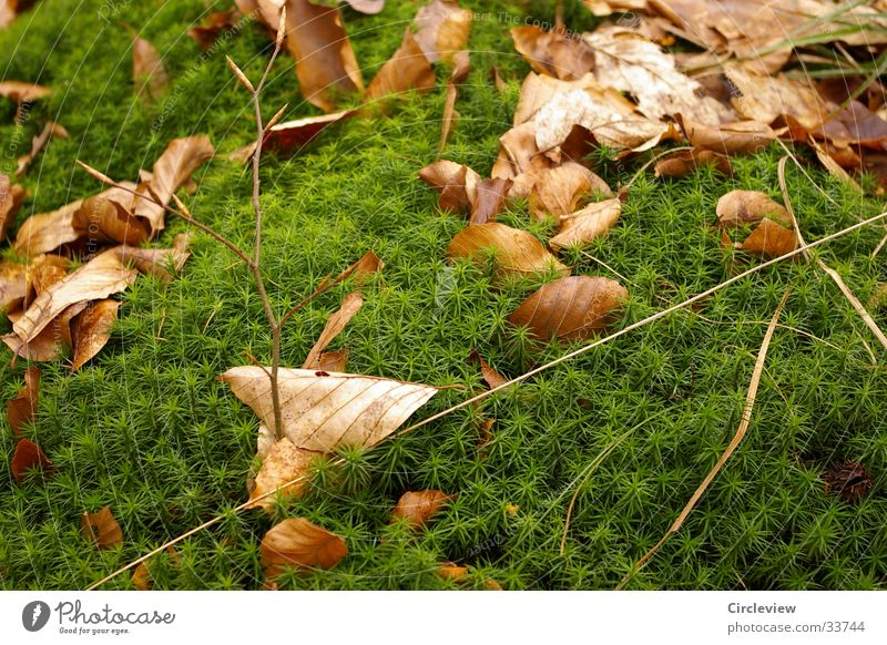 Idyll in the forest Leaf Maturing time Green Deciduous tree Brown Nature Shoot Growth Dried Contrast leaves Moss