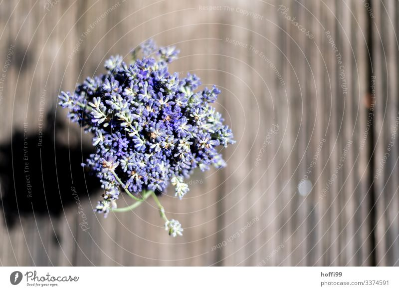 Lavender bound as a bouquet seen from above Blossom Flower Esthetic Fragrance Authentic Fresh Near Warmth Violet Spring fever Expectation Colour Joy Healthy