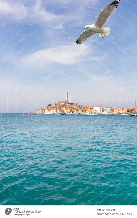 Panoramic view on old town Rovinj, Croatia. Sky Vacation & Travel Old Summer Blue Town Ocean Clouds Architecture Coast Tourism Watercraft Europe Church Harbour