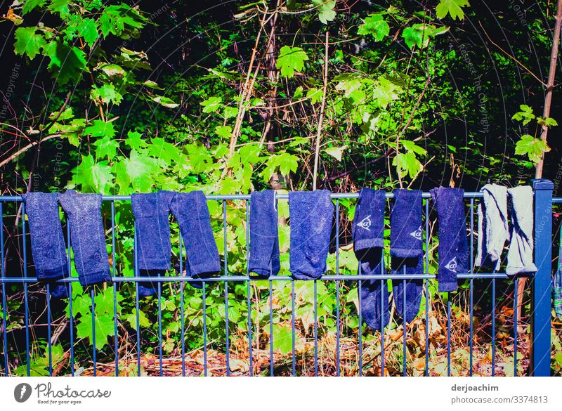 """Washing day in """" Franconia """" On a fence hung various blue pants to dry. In the background green leaves. Design Health care Environment Summer Beautiful weather"""