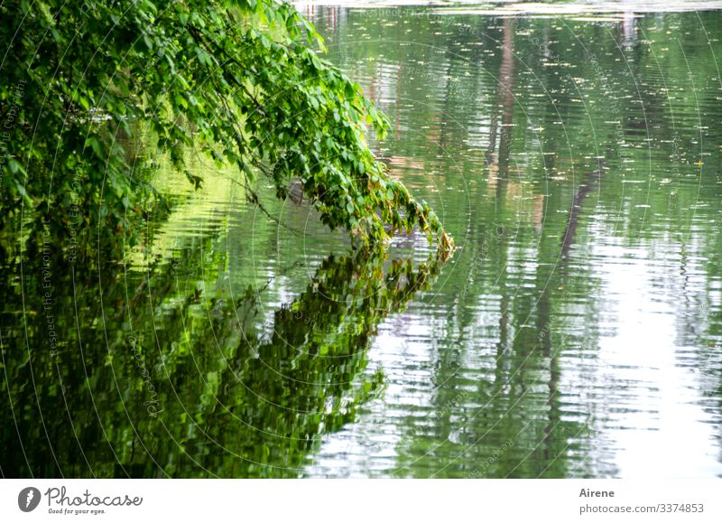 the land is hanging into the lake Day Deserted Exterior shot Colour photo Meditative Loneliness Longing Calm Green Tree Lake Pond Water Reflection Nature Idyll