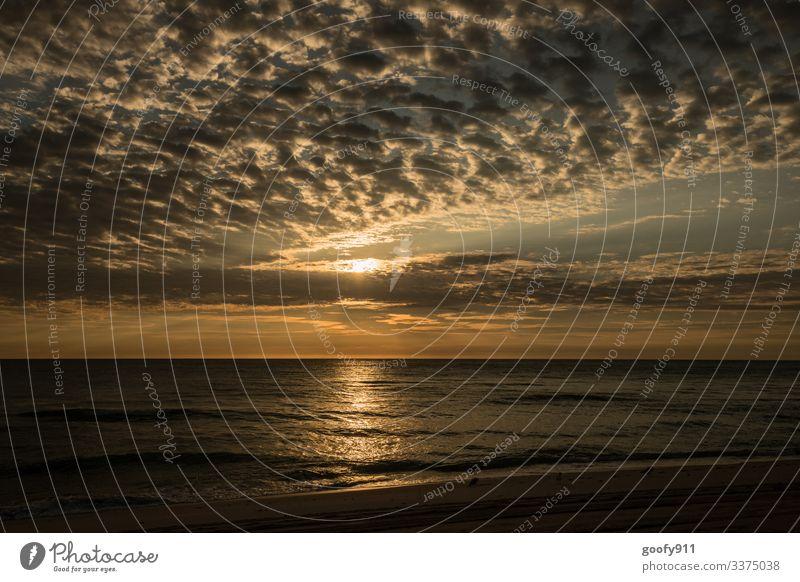 Sundowner Florida Sunset Sunlight Vacation & Travel Wanderlust Beach Sand Clouds Exterior shot Colour photo Ocean ocean Coast Waves Freedom Far-off places Dream