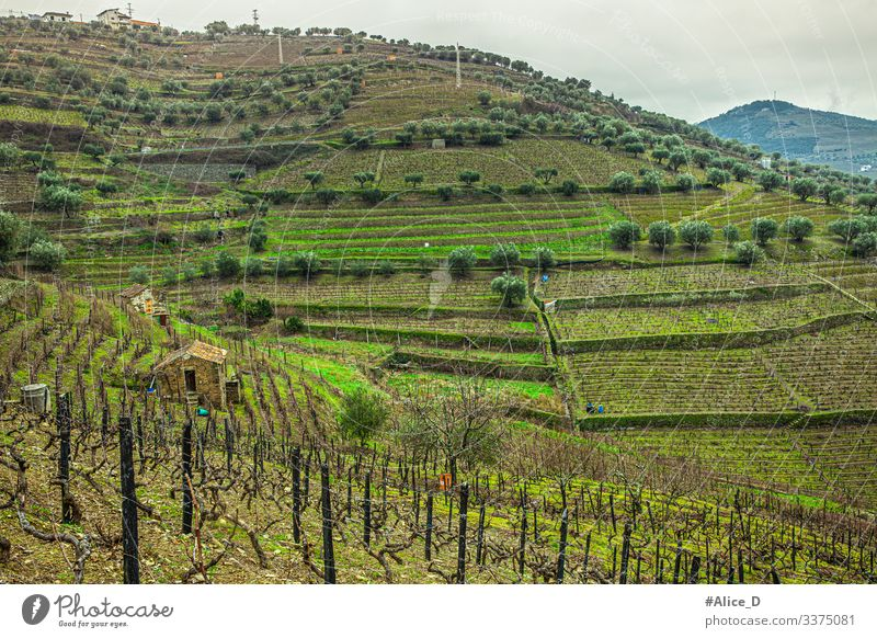 Green hilly landscape in the Douro valley region Portugal above view abstract agriculture beautiful country countryside cultivation douro douro valley duero
