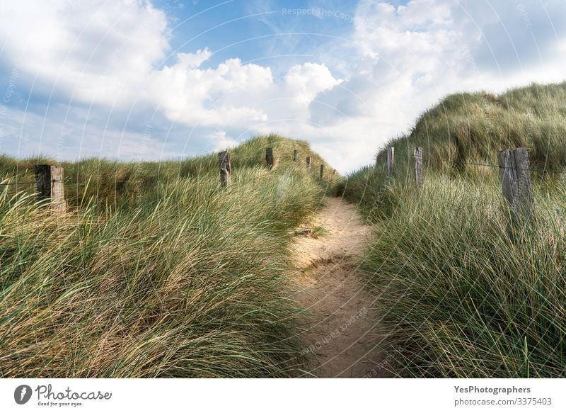Alley through tall grass on a sandy dune on Sylt island Freedom Summer Hiking Beautiful weather Hill North Sea Lanes & trails Optimism Frisia Germany