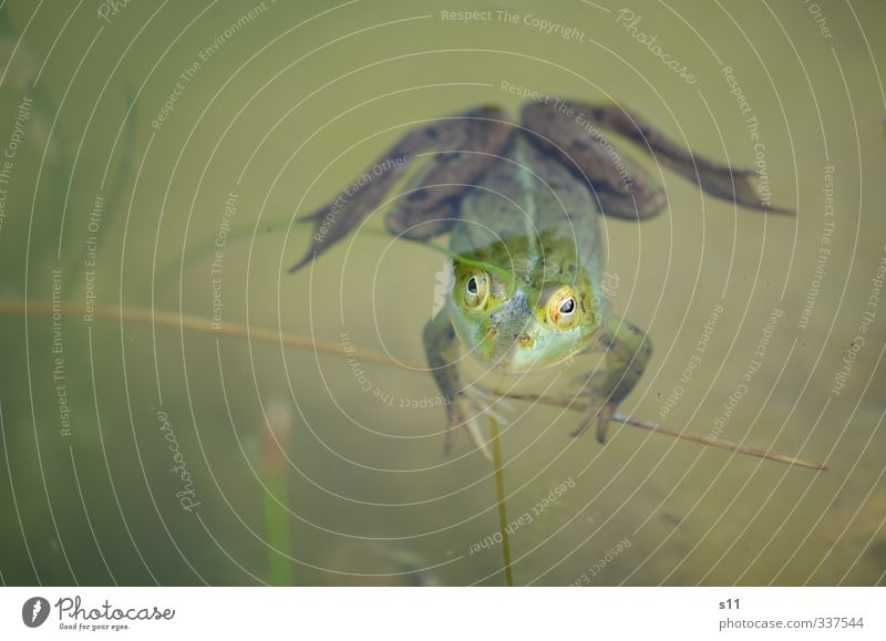 weather frog Nature Animal Water Spring Garden Pond Frog Animal face 1 Swimming & Bathing Observe To hold on Looking Wait Creepy Cold Funny Slimy Brown Green