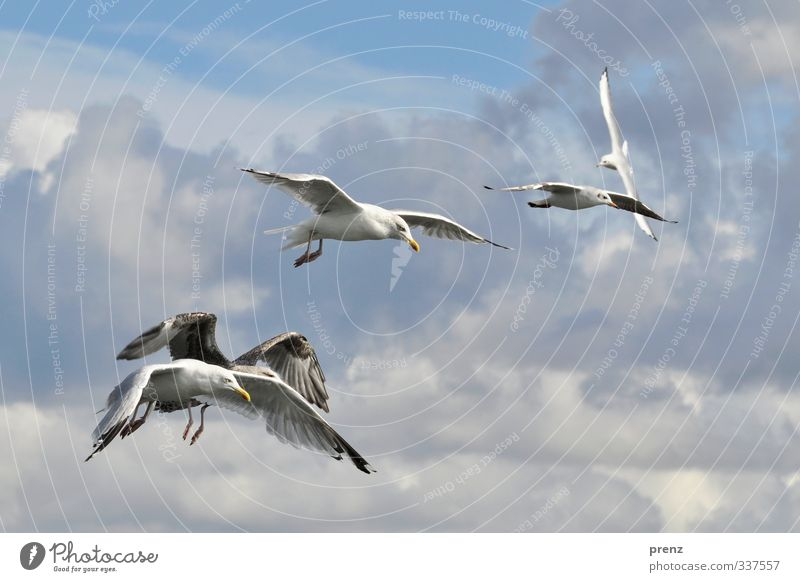 trip Environment Nature Animal Sky Beautiful weather Wild animal Bird Group of animals Blue White Seagull Flying Floating Baltic Sea Colour photo Exterior shot