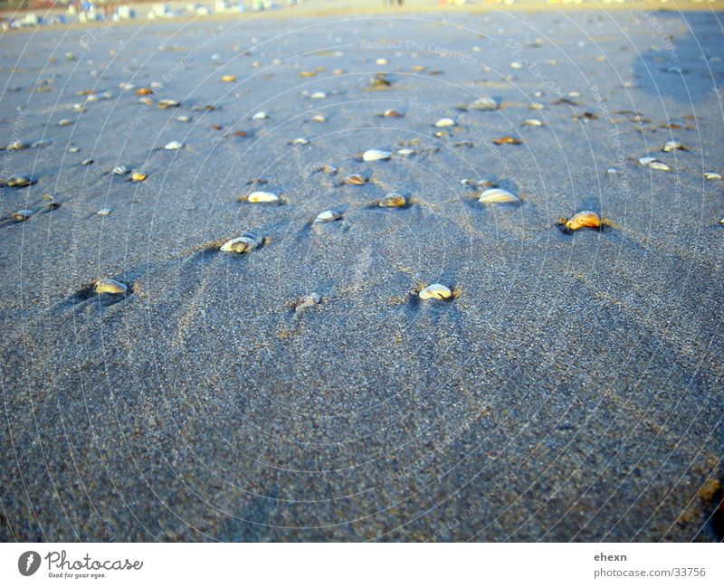 seashells Sandy beach Mussel Ocean Beach Netherlands Water Nature North Sea
