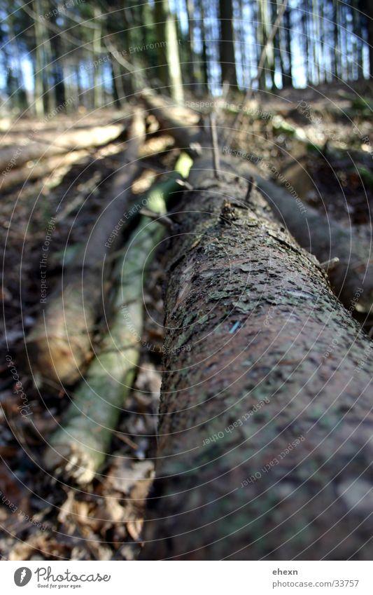 Longside!? Tree:) Forest Tree trunk Leaf Blur Branch Perspective