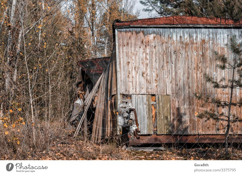 ruins of a wooden house in Chernobyl Ukraine in autumn Vacation & Travel Tourism Trip House (Residential Structure) Autumn Ruin Building Architecture Street