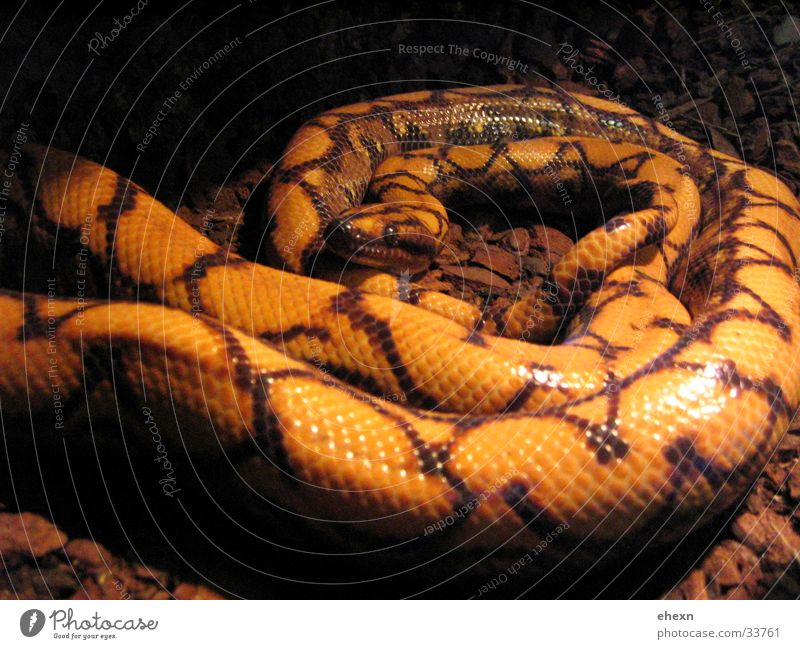 snakkker box Dark Disgust Beautiful Snake white snake spotted :)