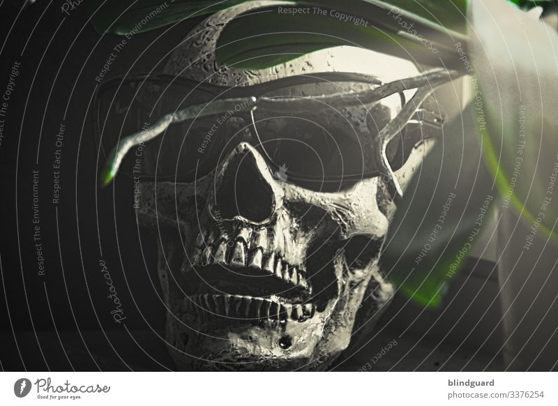 We're all gonna die, but not today. A virus and the mass hysteria. Virus Death Death's head Skeleton skull Pirate Sunglasses Creepy Head Hallowe'en Grave