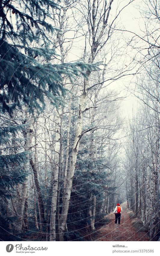 das alternde rotkäppchen im kalten walde Woman Forest off forest path birches Bleak conifers coping Red Backpack November Cold full slim Hiking To go for a walk