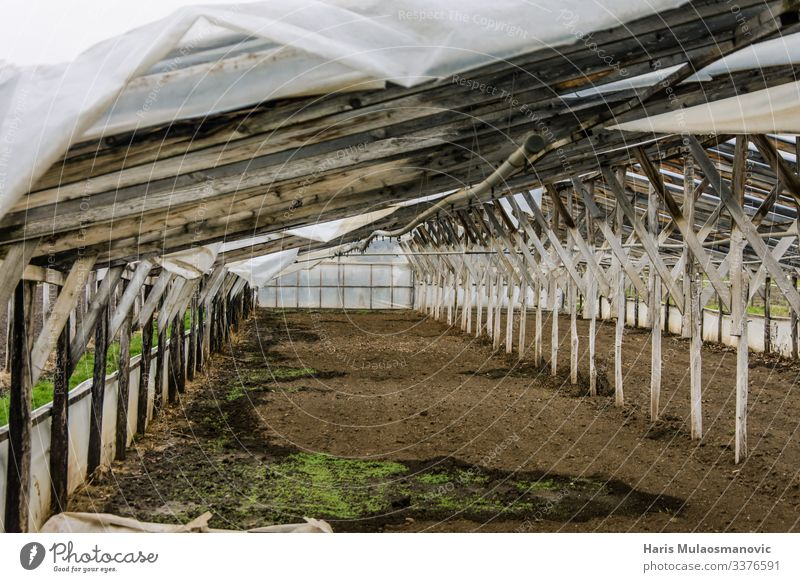 Abandoned wooden plastic greenhouse Food Eating Agriculture Forestry Industry Responsibility Greenhouse Wood Plastic Colour photo Exterior shot Morning Day