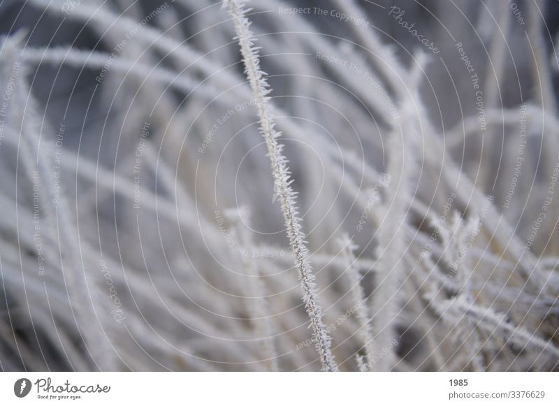 frosty grass Frost Blade of grass icily Frozen Winter morning chill Exterior shot Ice Nature White Colour photo Seasons natural Plant Deserted Close-up
