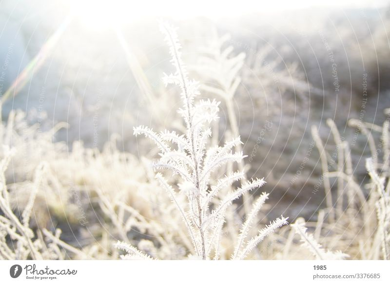 Frozen shrub Sunbeam ice crystals winter landscape Winter chill Exterior shot Frost Colour photo Deserted Seasons Nature Ice Hoar frost Plant Ice crystal
