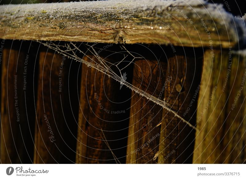 Spider's web frozen Frozen wood Colour photo Detail Exterior shot Deserted Close-up Nature Winter chill Frost Ice Pattern White Abstract Subdued colour Discover